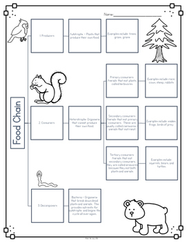 Food Chains Diagram & Comprehension Questions by Bow Tie