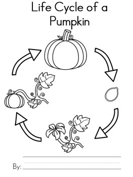 Free Pumpkin Life Cycle Writing Activity by Teaching with