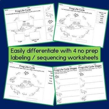 Frog Life Cycle 3 Part Cards Observation Journal And