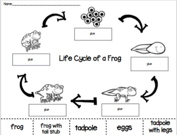 Frog Life Cycle Cut and Paste PACK by PreKinders in