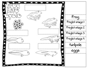 Frog Life Cycle Pack/ Pond Life Resource by 4 by 4 Math