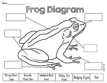 frog and toad venn diagram wiring for car stereo sony frogs toads unit by meghan snable teachers pay