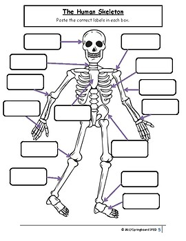 Full Adapted Lesson/Work Packet: The Human Skeleton by