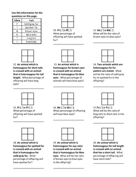 Genotypes And Punnett Square Worksheets By Haney Science