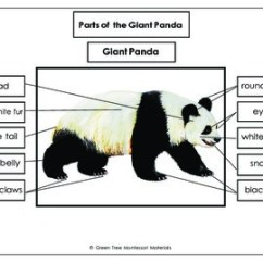 Panda Bear Diagram Lambretta Electronic Wiring Printables Free Label The Parts Of A Giant Tpt