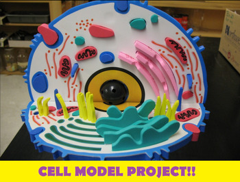 plant cell diagram project ideas kia spectra stereo wiring grade 8 and 9 model by ms jay's classroom | tpt
