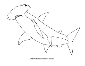 Shark Coloring Pages Worksheets Teaching Resources Tpt