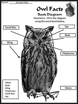 Halloween Reading Activities: Owl Facts Science Activity