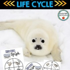 Harp Seal Life Cycle Diagram Fender Jaguar Wiring Wheel And Poster Set By Sarah Tighe Tpt
