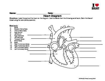 Heart Diagram and Blood Cell Worksheet by Family 2 Family