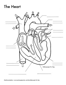 Heart Diagrams for Labeling and Coloring, With Reference