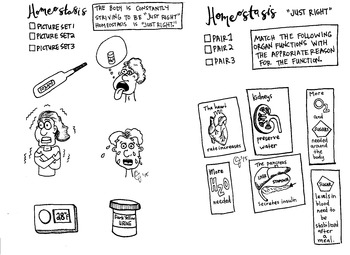 Homeostasis Coloring Sheet Eoc By Scientifically Speaking