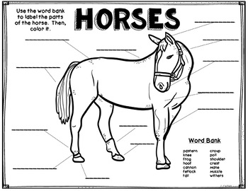 Horses, Anatomy Diagram, Coloring, Vocabulary, Science by