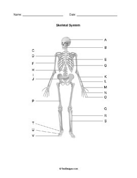 Human Anatomy: Body Systems Diagrams Pack by Help Teaching