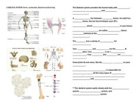 Human Anatomy and Physiology Fill-In-Blanks Worksheets by ...