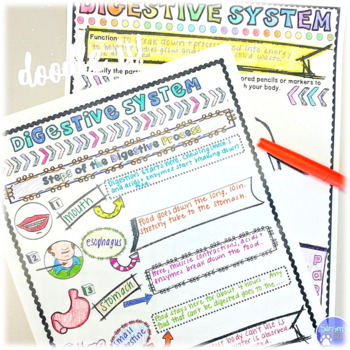 Human Body Sketch Note Graphic Organizer Activity Set by