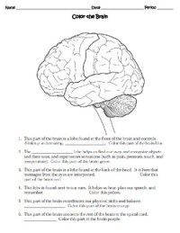 Human Body THE NERVOUS SYSTEM Worksheet by Sweet D | TpT