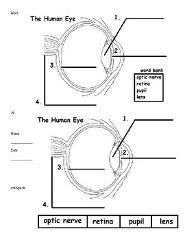 Human Eye & Ear (label practice & quiz) 3rd-5th by Wendy