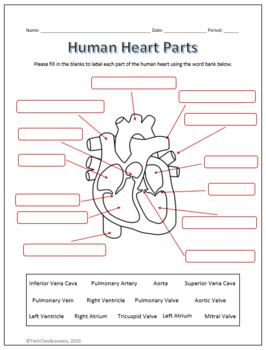 Label The Heart Diagram Worksheet Answers : label, heart, diagram, worksheet, answers, Human, Heart, Diagram, Label, Labels, Design, Ideas