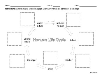 human life cycle stages diagram conventional fire alarm wiring by melissa vazquez teachers pay
