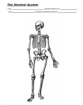 Human Skeletal System PowerPoint with Cloze Notes and
