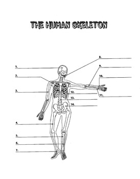 human bone structure diagram 91 toyota pickup ignition switch wiring skeleton to label middle school by merey tpt