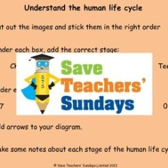 Human Life Cycle Stages Diagram How To Wire Up A Light Switch Of Development Lesson Plan Text And Worksheets