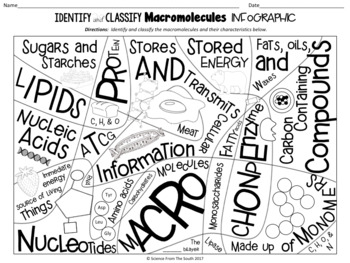 Identify and Classify Macromolecules Infographic for Notes