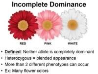 Incomplete Dominance & Codominance PowerPoint (w/ Punnett ...