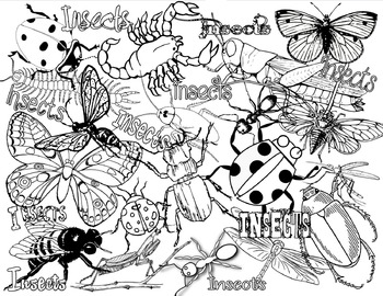 Insects Or Bugs Coloring Page By Champagnewisdom Tpt