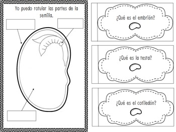 Interactive Life Science Notebook Spanish by Texas