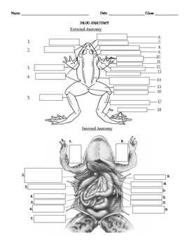 Internal and External Frog Anatomy Label and color the