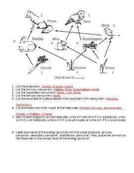 Food Web Worksheet Answer Key : worksheet, answer, Interpreting, Worksheet, Teach, Middle