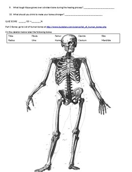 Introduction or review of the Human Skeletal and Muscular