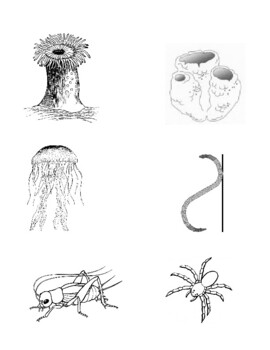 Invertebrate Dichotomous Key Worksheet with Animals by Ian