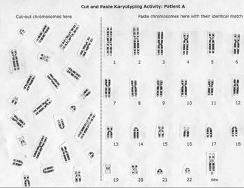 pervamlearn • Blog Archive • Chromosomes and karyotypes