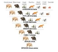 Classification Of Organisms Worksheet. Worksheets ...