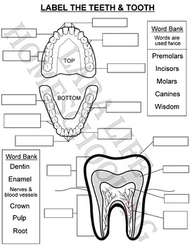LABEL THE TEETH & TOOTH WORKSHEET by Lara Life