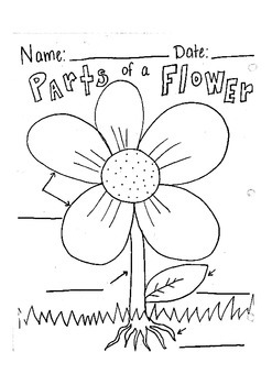 Label Parts Of A Flower Worksheet By Robyn Brooke