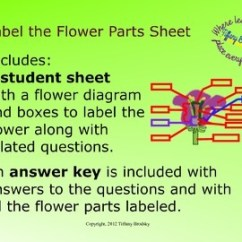 Flower Parts Diagram Without Labels Car Radio Wiring Diagrams Label The And Corresponding Questions By