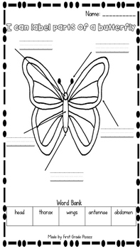 Parts of a Butterfly Label Activity FREEBIE by First Grade