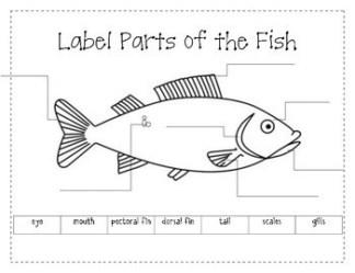 fish label parts labels activities preview