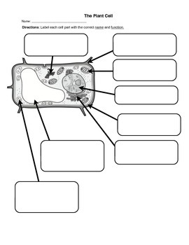 Label the Plant Cell Worksheet by Innovate4Students