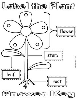 Label the Plant Cut & Paste Worksheet {FREEbie} by The