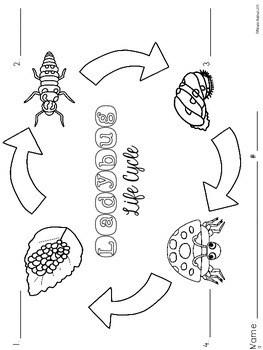 Ladybug Life Cycle {Informational Text, Printables, Cut