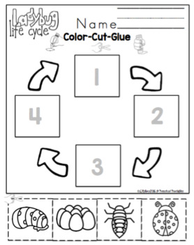 Ladybug Lifecycle Printable