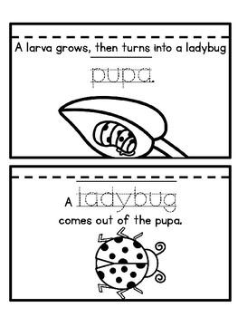 Ladybug life cycle flip book by