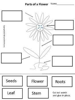 Learning Cycle for Kindergarten Parts of Plants by Lynda R