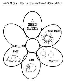 Lesson Plan: WHAT A SEED NEEDS TO GROW INTO A FLOWER/PLANT