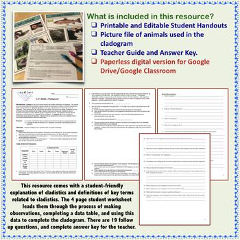 Cladogram Activity Build A Cladogram Classification